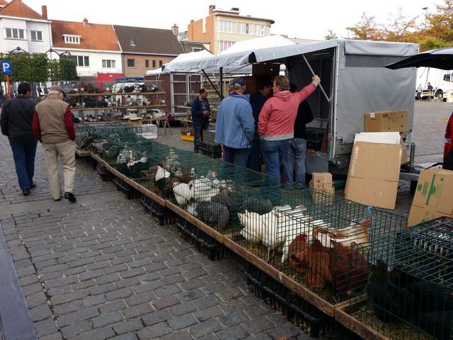 Geflügelmarkt Sünching